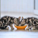 Mengetahui Akan Harga Proplan Kitten Demi Pemilihan Makanan Kucing Terbaik